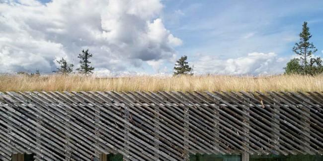 крыша дома с травой