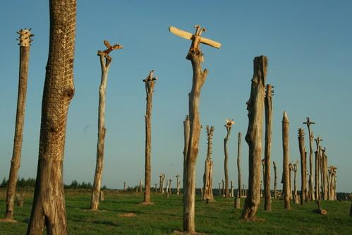 Выставка ландшафтных объектов участников проекта Граница