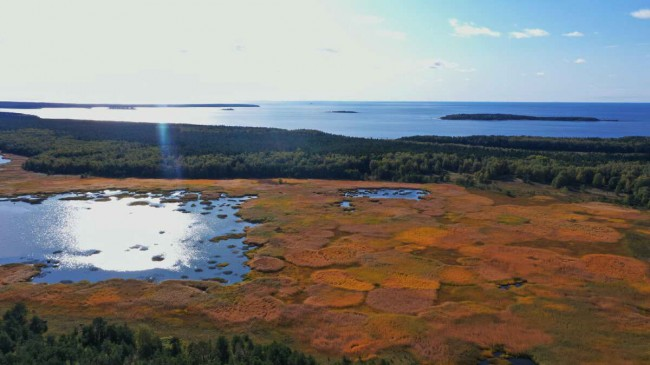 Варяжское море - болото