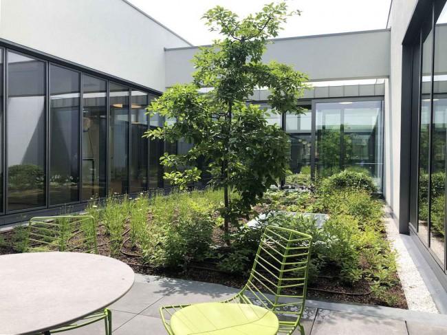 внутренний сад во дворе