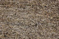 панель из прессованной соломы озимой пшеницы