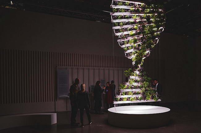 инсталляция с растениями - кураторская школа Avant-Garde LAB