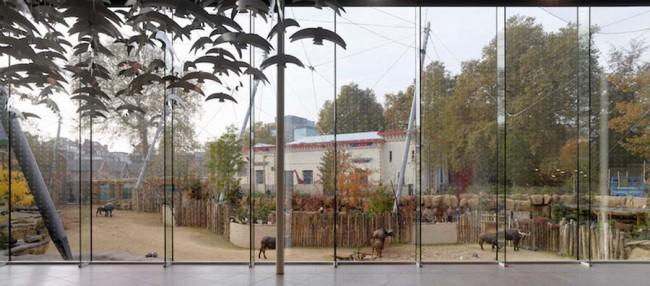 вид из окна ресторана на вольер с буйволами