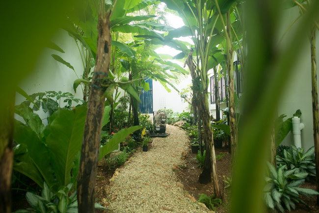 сад с аргентинскими и бразильскими деревьями