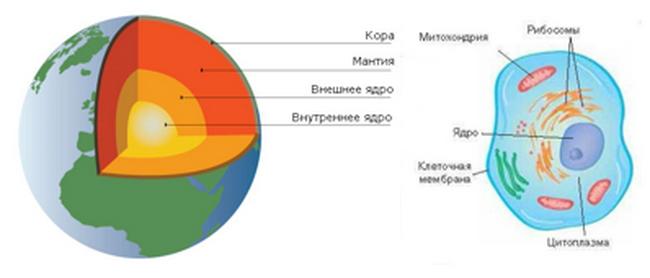схемы строения клетки и земли