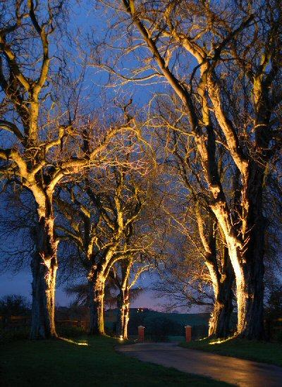 Ландшафт: схему освещения аллеи можно построить с помощью светильника In Ground 1-11, Driveway Lite...